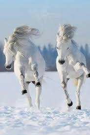 twinsFoal