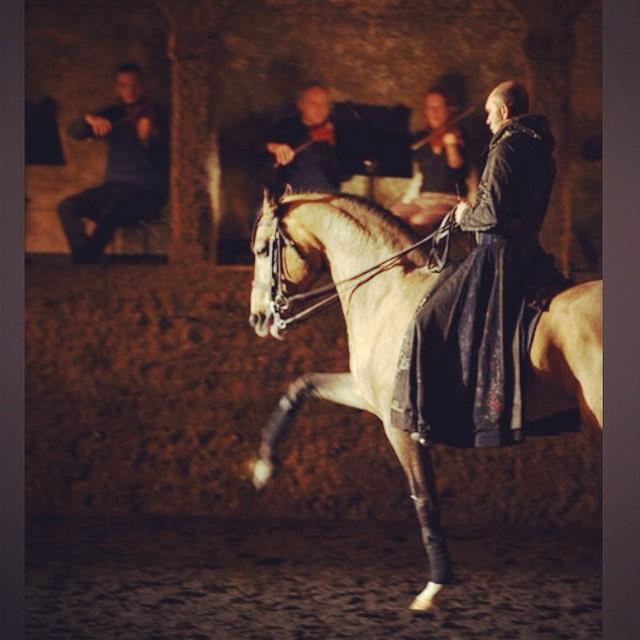 Equestrian Lifestyle Bartabas Mozart Lusitano