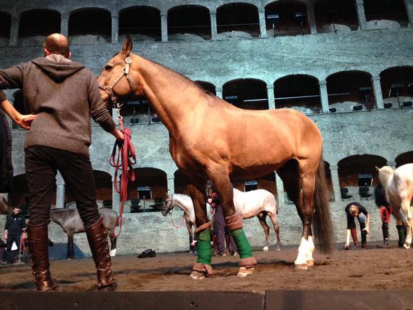 Equestrian Lifestyle Lusitano Bartabas Mozart