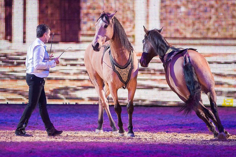 Equitana Equestrian Lifestyle