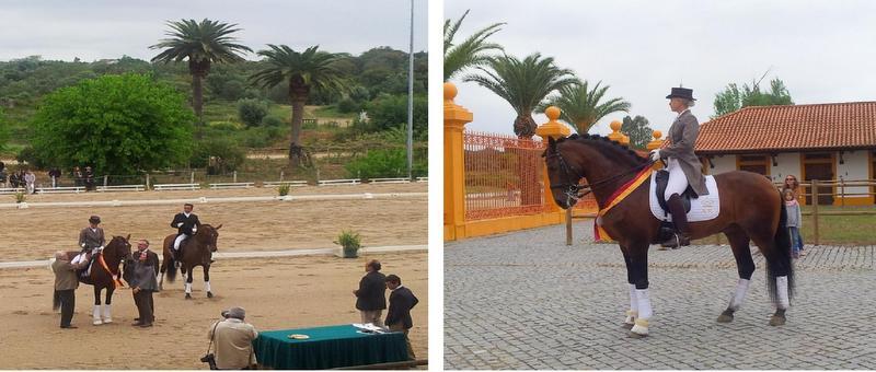 Equestrian Lifestyle Alter Real RUBI AR