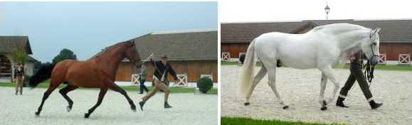 Equestrian Lifestyle PRECUP Amerang