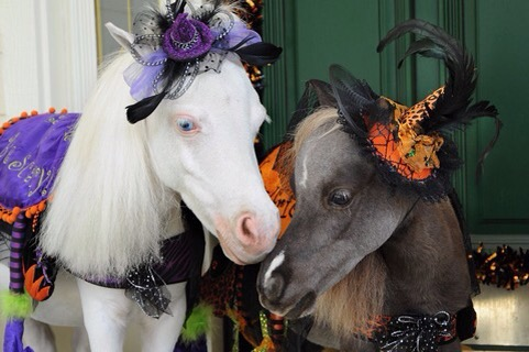 Halloween horse equestrian lifestyle