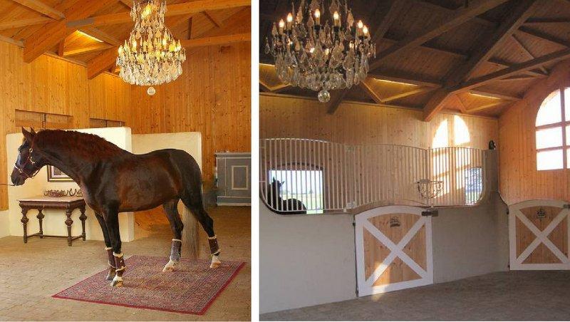 Equestrian Lifestyle PRECUP