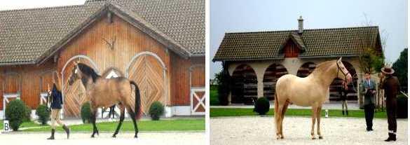 Equestrian Lifestyle Amerang PRECUP